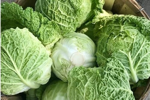 Cabbage-Top-10-Best-Foods-For-Your-Kidneys